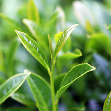 Cloud tea,十方云集,茶葉網頁設計,文創網站設計,網頁設計,RWD,honepage,茶網頁設計,茶品網頁設計